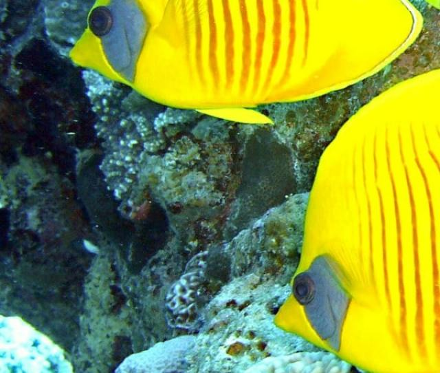 Preschool Fish Theme Activities Everything You Need To Plan Your Preschool Fish Theme