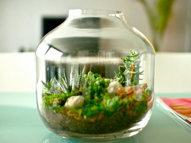 plantas del terrario en miniatura 634x476 15 obras maestras terrarios miniatura inspirarse Creativa De