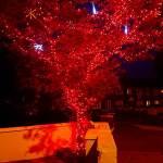 Christmas LED Tree Lights Red