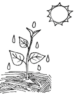 Jelly Bean Experiment Sunflower Seedlings t