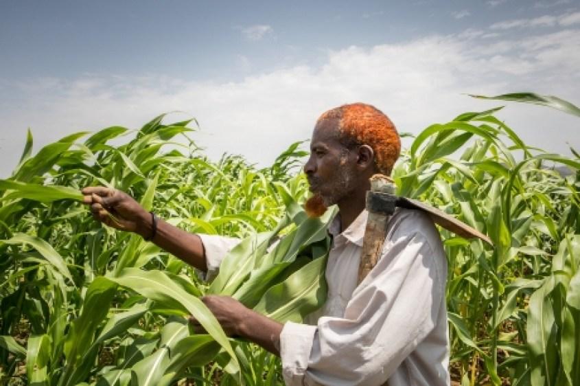 Transformar los sistemas alimentarios y agrícolas: un reto que debemos afrontar juntos