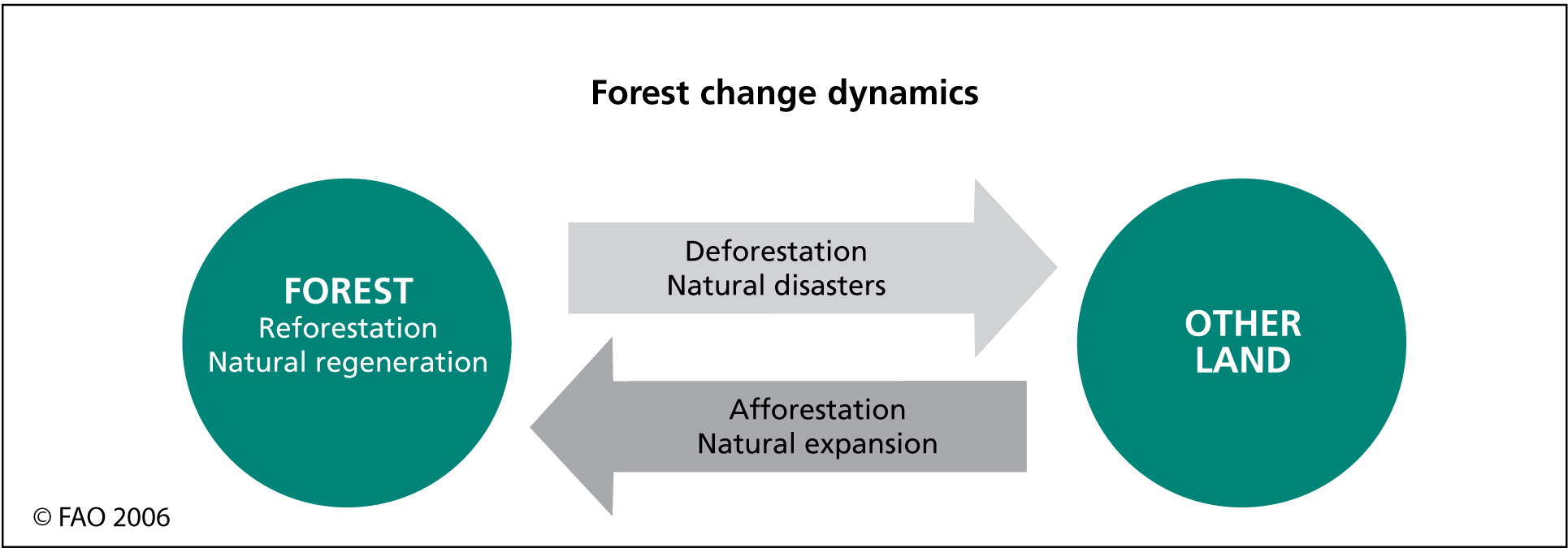 hight resolution of forest change processes