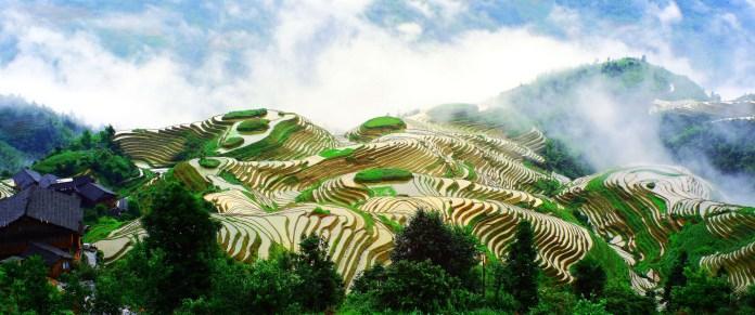 Photo: © Agriculture Bureau of Longsheng County