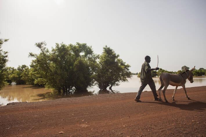 Photo: ©FAO/Giulio Napolitano/FAO
