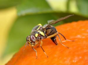 FAO - News Article: Keeping plant pests and diseases at bay: experts focus on global measures