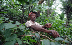 Across six countries in central africa: Forests People And Environment World Forestry Congress Food And Agriculture Organization Of The United Nations