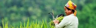 Kết quả hình ảnh cho AGRICULTURAL ECONOMY IN VIETNAM
