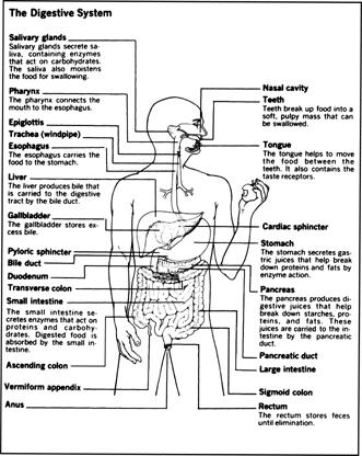 Process Flow Diagram Definitions