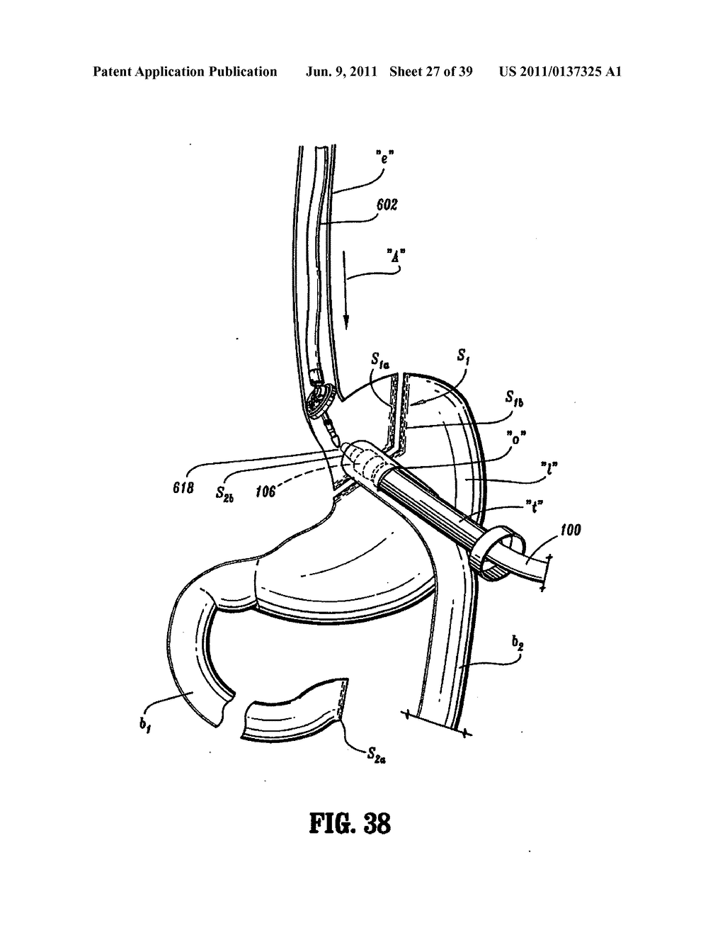 rat digestive system diagram quiz how to wire a garage free coloring pages of