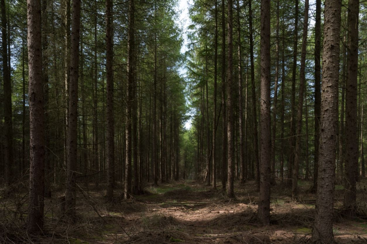 light-falling-on-forest-floor-amid-trees-in-high-lodge-thetford-forest-norfolk