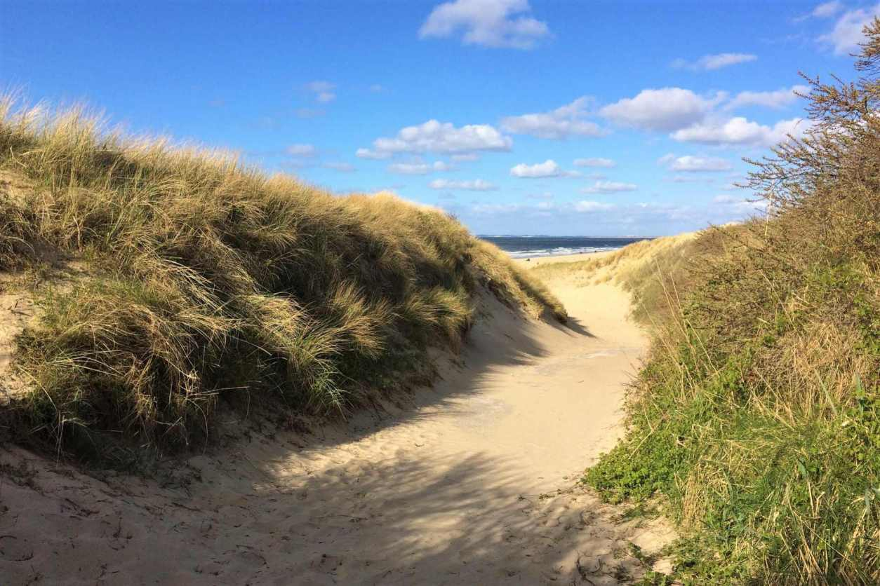 sand-dunes-leading-down-to-sandy-zeeland-beach-with-blue-skies-nature-in-the-netherlands-beautiful-places-in-the-netherlands