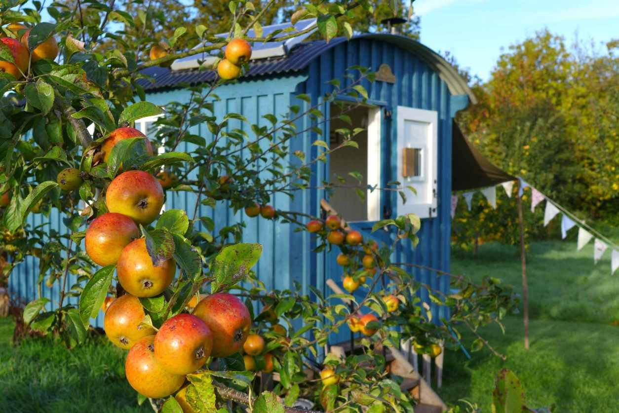 apple-tree-in-orchard-in-front-of-blue-skyrrid-shepherds-hut-at-hollow-ash