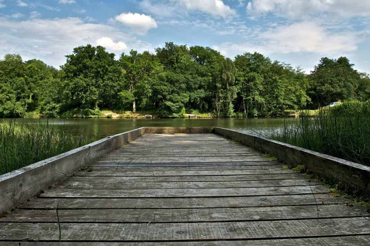 boardwalk-to-cannop-ponds-on-sunny-day