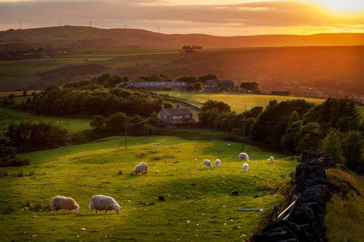 sheep-grazing-in-field-at-sunsetin-pilsbury-best-peak-district-walks