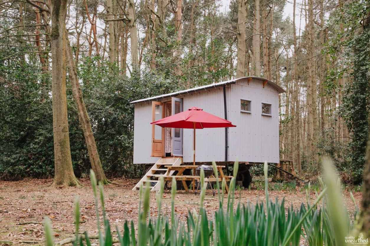 small-goosewing-shepherds-hut-in-forest-in-daytime-at-rosslyn-glamping