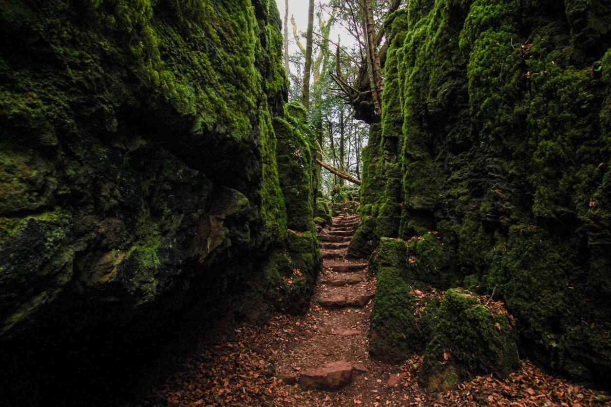 steps-leading-through-puzzlewood-forest-with-moss-on-rocks-things-to-do-in-the-forest-of-dean