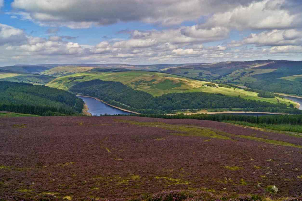 heather-on-win-hill-with-ladybower-reservoir-in-background