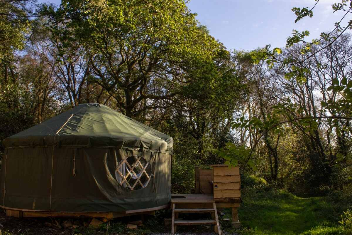oak-tree-yurt-on-decking-surrounded-by-trees