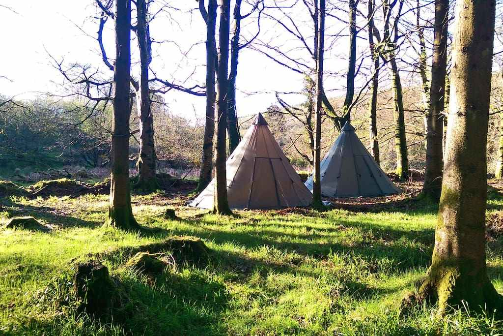 two-tipis-in-forest-at-tipi-adventures-tipis