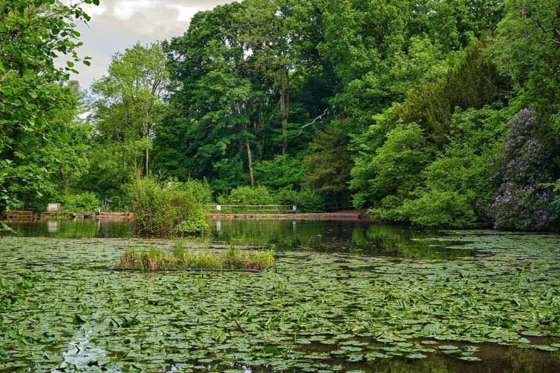 abbots-pool-pond-with-lily-pads-surrounded-by-trees