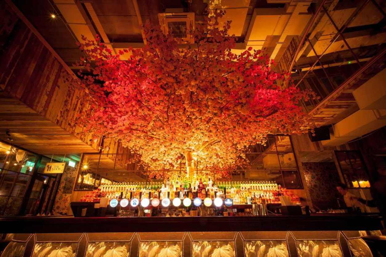 orange-tree-behind-bar-of-house-restaurant-bottomless-brunch-belfast