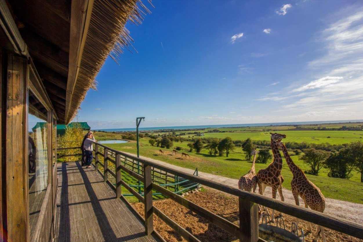 terrace-of-port-lympne-giraffe-lodge-overlooking-giraffes