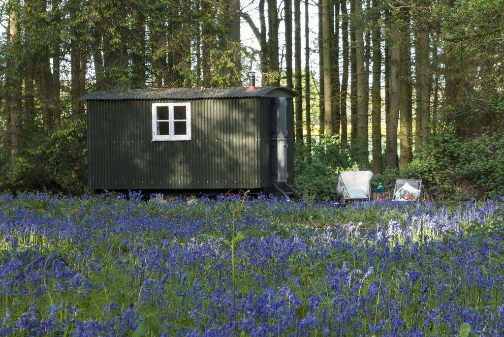 wildwood-bluebell-posey-shepherds-hut-in-woodland