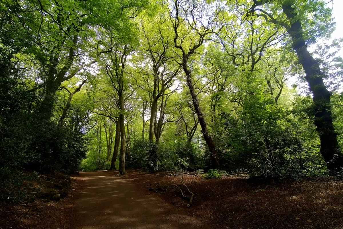 path-surrounded-by-trees-in-woolton-woods