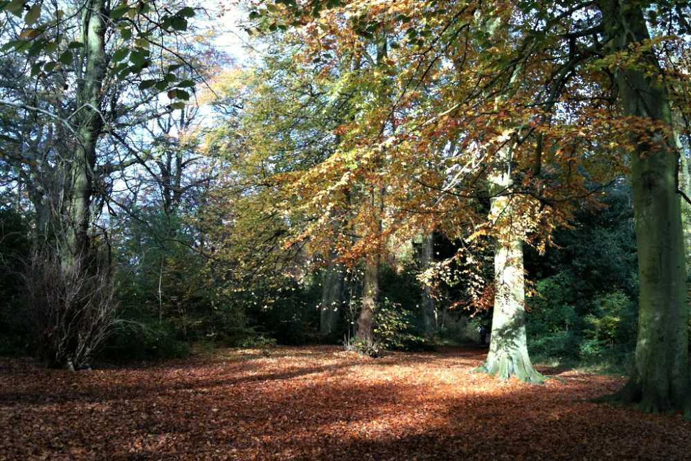 trees-in-childwall-woods-in-autumn