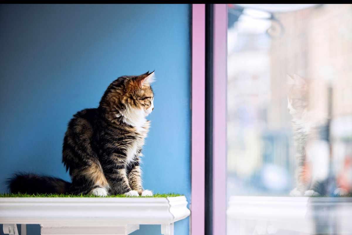 cat-inside-lady-dinah's-cat-emporium-cafe
