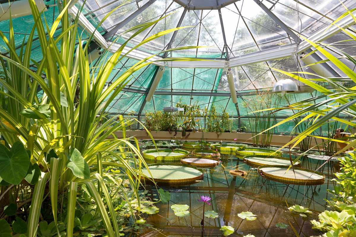 pond-inside-botanical-garden-of-elte-on-sunny-day