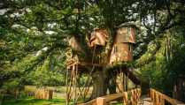 treetops-treehouse-at-fox-and-hounds-hotel-treehouses-devon