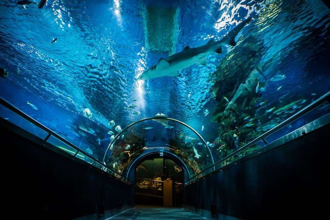 tunnel-with-sharks-at-tropicarium-budapest
