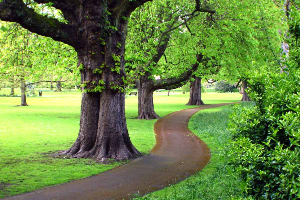winding-path-going-past-trees-in-henrietta-park