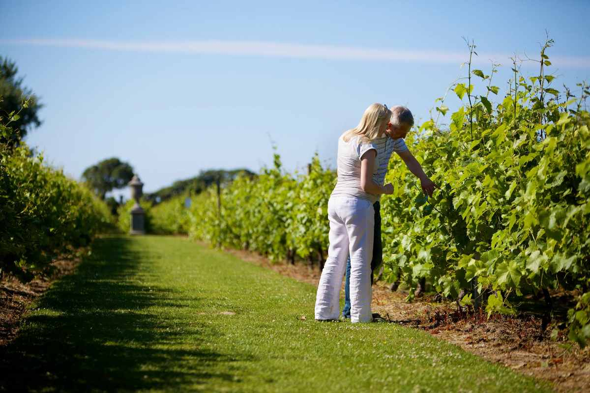 couple-picking-grapes-at-la-mare-wine-estate-3-days-in-jersey-itinerary