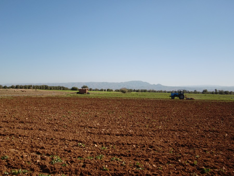 ploughing fields in souss valley