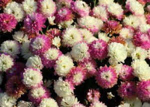 Gartengestaltung im Herbst – optische Akzente zu jeder Jahreszeit