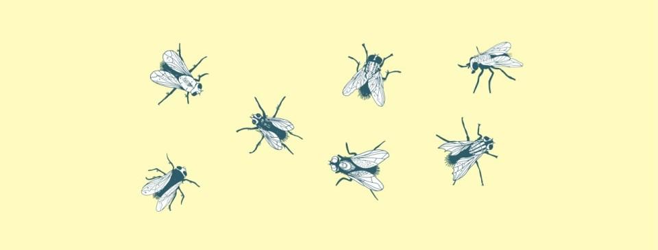 Kleines Schneiderlein ganz groß - 7 gezeichnete Fliegen sitzen auf einer gelben Wand