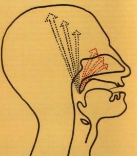 fig. 6 cavità di risonanza sopraglottiche (vocal tract)