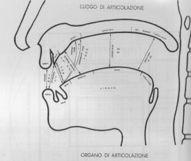 fig. 7 luoghi e modi di articolazione consonantica per la lingua italiana