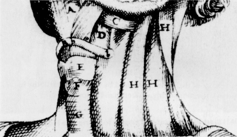Fig. 1/a. Da una tavola del De vocis auditusque historia anatomica (Ferrara, 1600) di Giulio Cesare Casseri (Casserius). Questa incisione rinascimentale mostra come la laringe (indicata con «E») costituisca il culmine della trachea e come la sua parte frontale corrisponda alla sporgenza del pomo d'Adamo. Svariati muscoli al di sopra e al di sotto di essa possono modificare la sua posizione verticale.