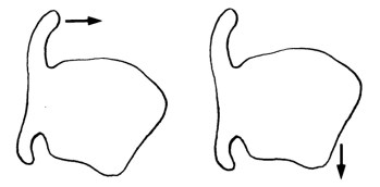 Fig. 3/a: tecnica da camera rinascimentale Fig. 3/b: voix sombrée