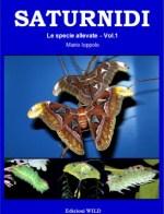 Saturnidi – Le specie allevate vol. 1