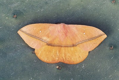 Farfalle dal mondo - Colorazione dei bruchi ...