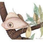 Nuove scoperte su fossili del giurassico dall'aspetto di farfalle: un esempio di convergenza evolutiva