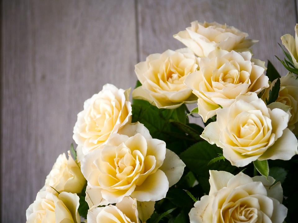 I fiori per la Festa della Mamma  FarfalleRare