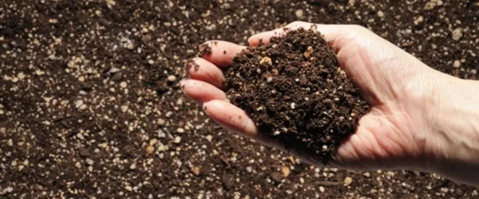 Terreno coltivo