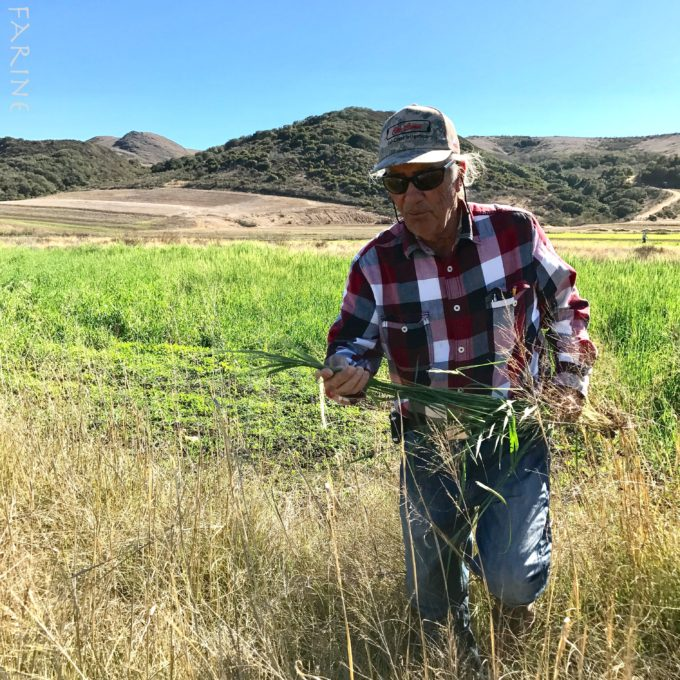 Farmer Larry Kandarian with black einkorn