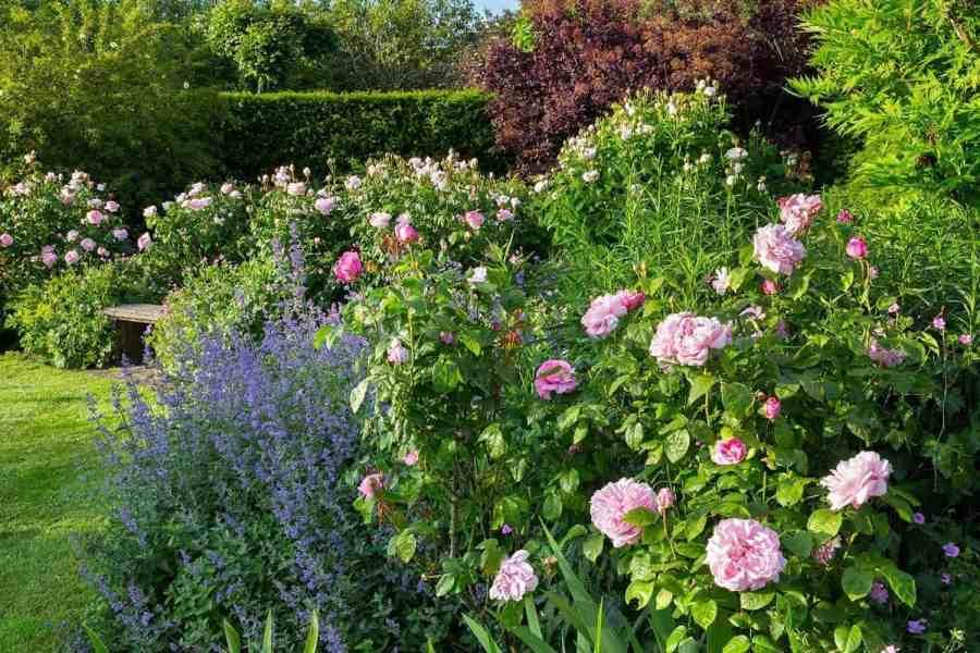 The Farleigh Wallop rose garden