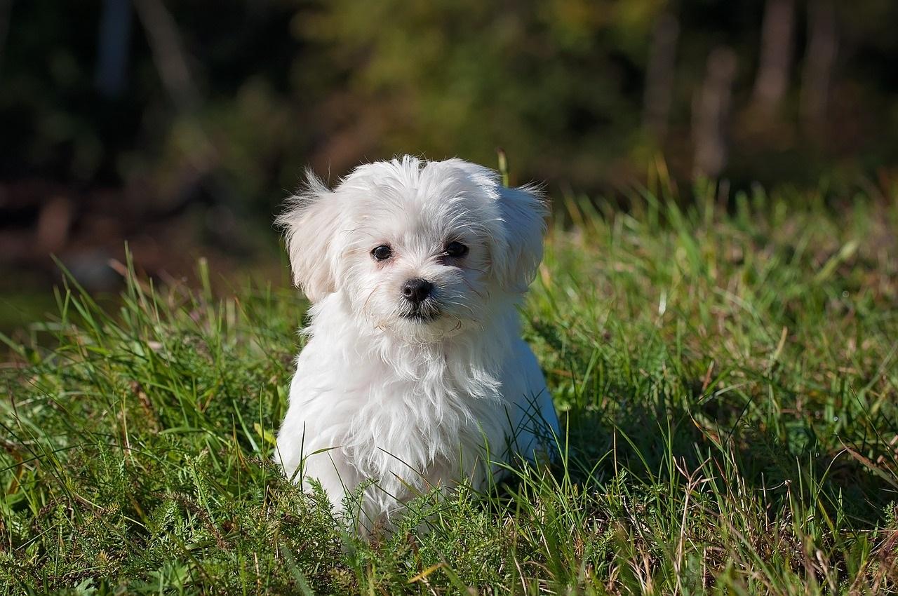 Parassiti di cani e gatti, il caldo aumenta i rischi